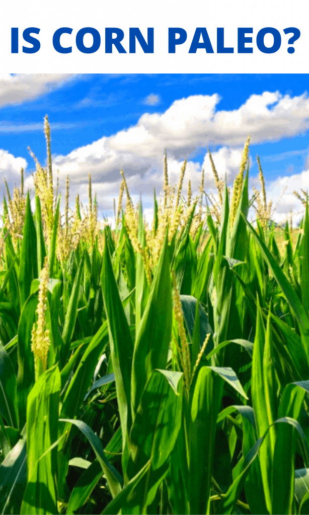 Is corn paleo post image with a corn field